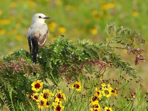 Birding a Different Part of Texas