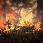 Covid wildfire.jpg