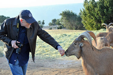 auodad sheep whisperer.JPG