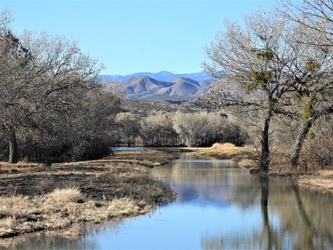 Bosque del Apache Should Be on Every Birder's Bucket List