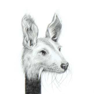 ALMOST ANIMAL 6