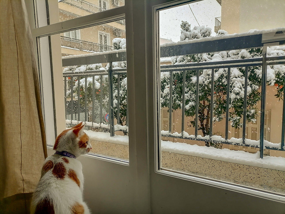 Cat and Snow in Athens!
