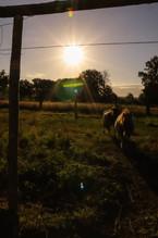 Die Ponies auf ihrer Wiese