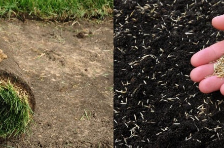 Hydroseed or Sod? Which is right for you?