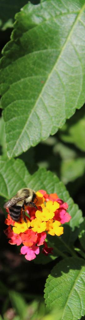 flowers 5 bee.JPG