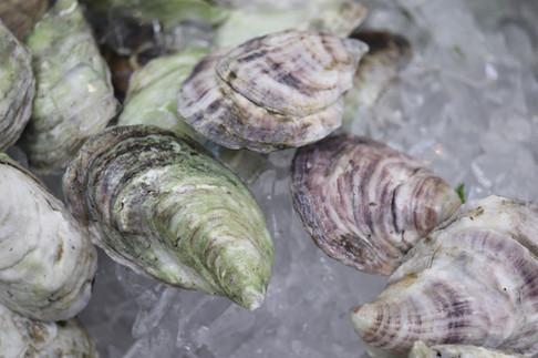 Venus Oysters