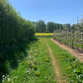 Orchard views- J.Watt