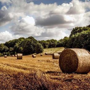 Harvest at Parixbourne- J.Newell