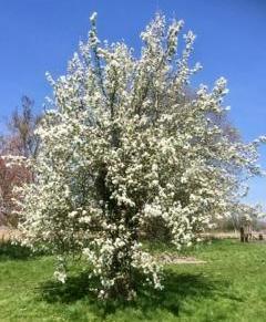 Blossom- M.Gabbe