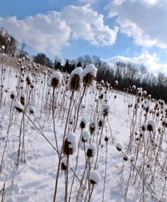 Snow- M.Gabbe