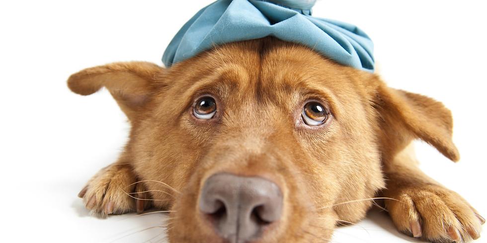 Erste-Hilfe-Kurs für den Hund