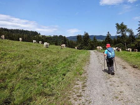 Appenzellerweg (7).jpg