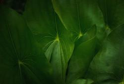 greenbottomrain_033