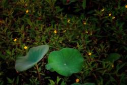 greenbottom3_134