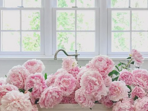 Peony Season is here