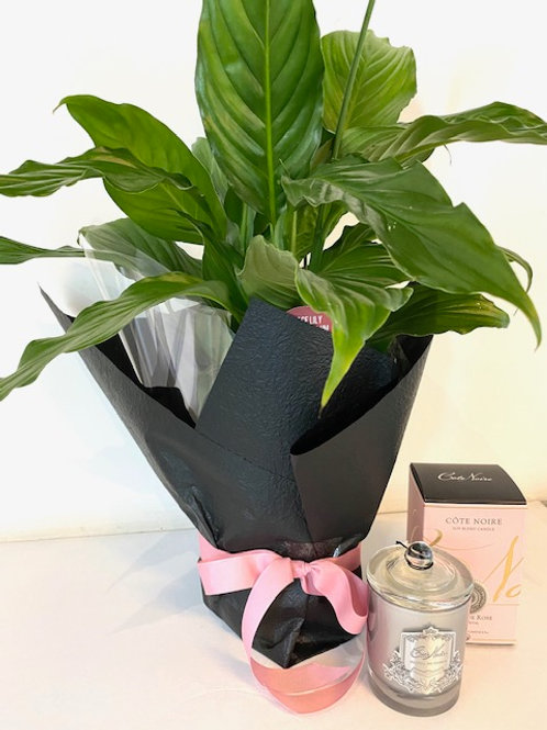 Peace Lily & Candle