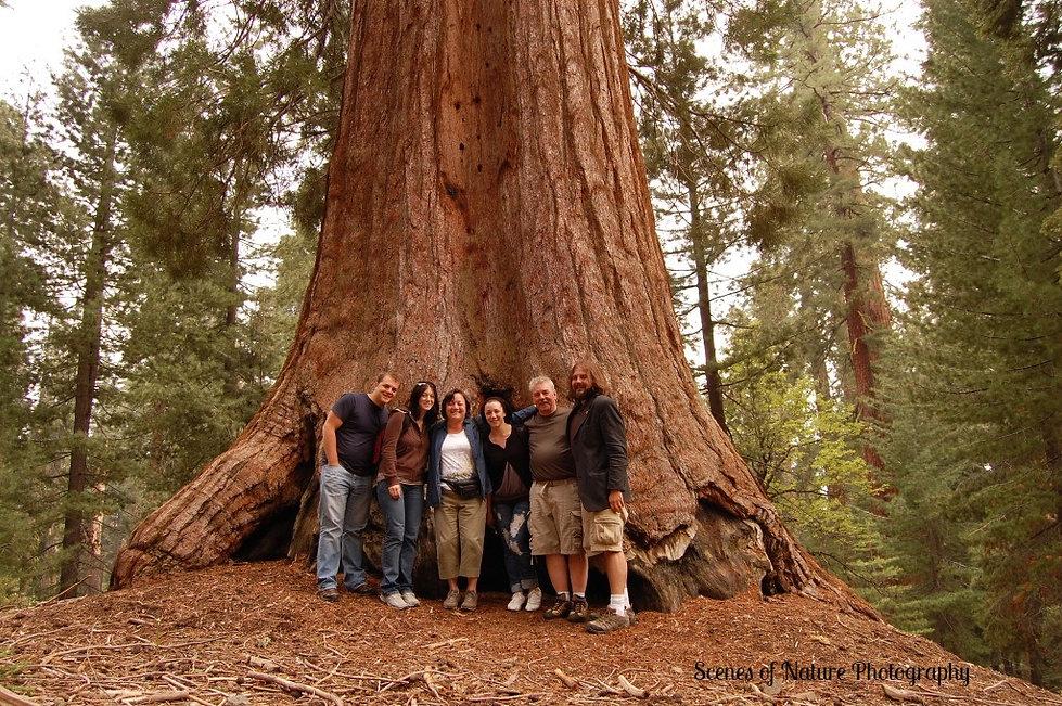 family tree_edited.jpg