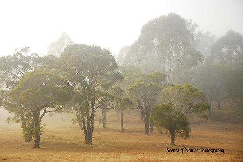 Misty Morning - Australia