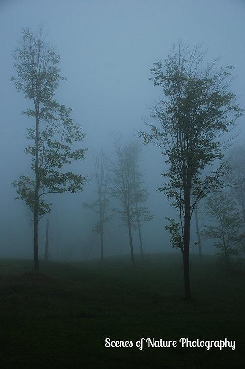 Trees in the Mist - Chittenden, Vermont