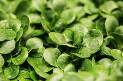 salad-lamb-s-lettuce-lettuce-leaves-green-60505
