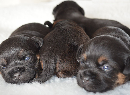 Puppy enquiries and information