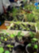 2019-05-25, trocplantes - Copie.jpg