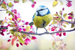 spring-bird-2295434_640