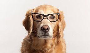dogglasses.jpg