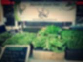 Microgreens on display at market