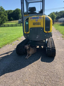 Scooter staying cool on the farm