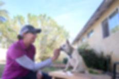 dog trainer training dog