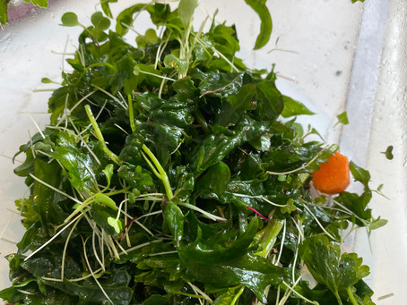 Food in the time of quarantine: Wild Salad