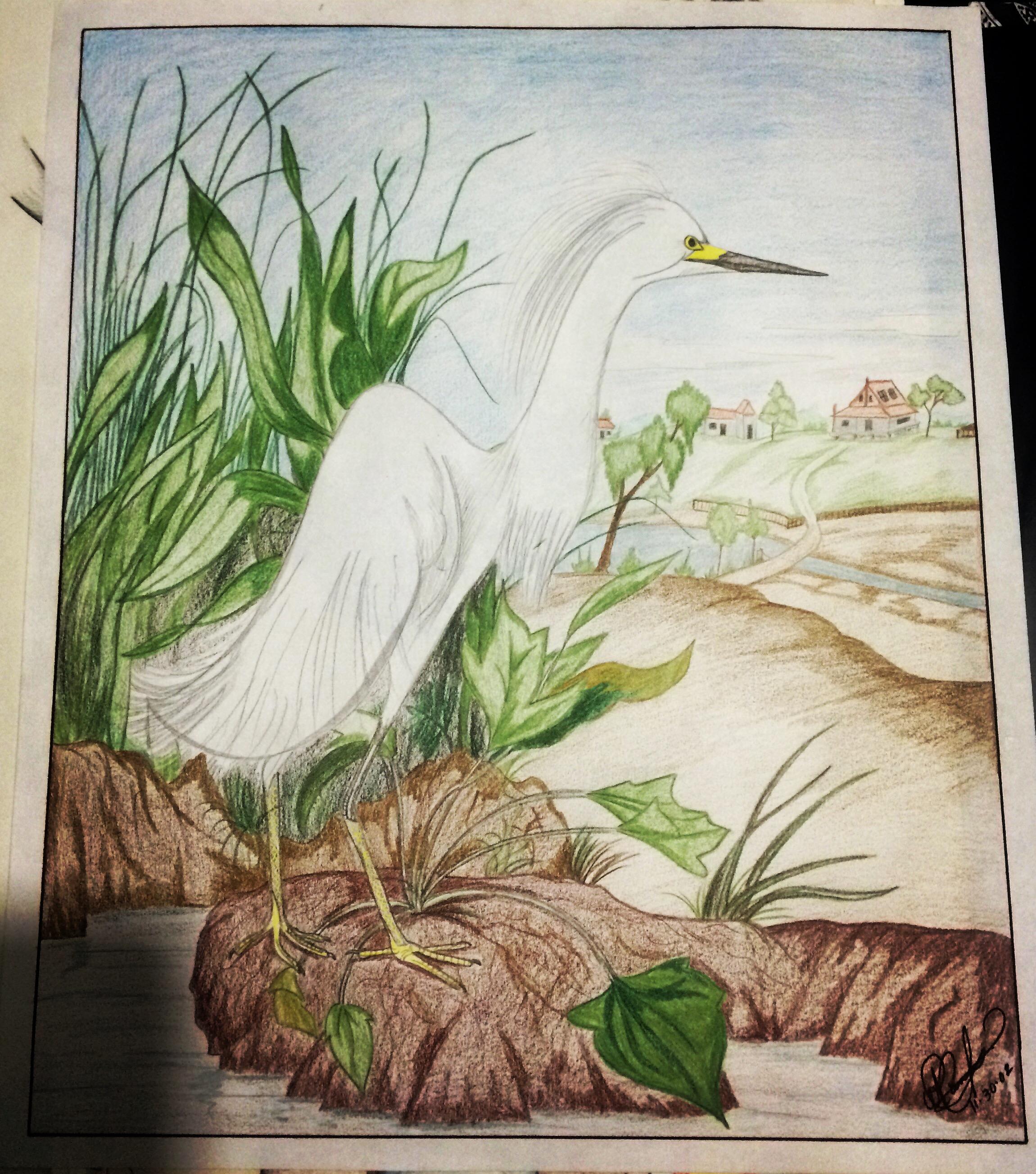 colorpencil bird