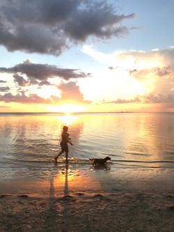 Sunset walking. Dog walking