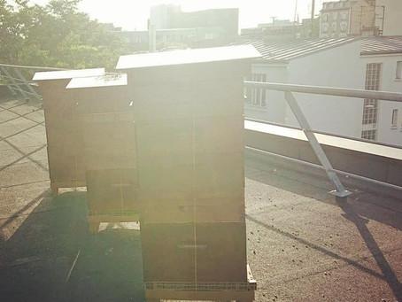 La récolte progresse vite pour le Miel de Paris