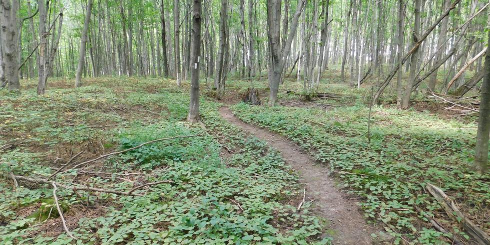 Nottawasaga Bluffs Hike