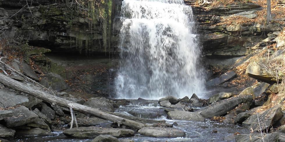 Waterdown Woods Hike