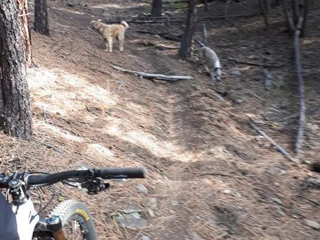 Trail Obstacles