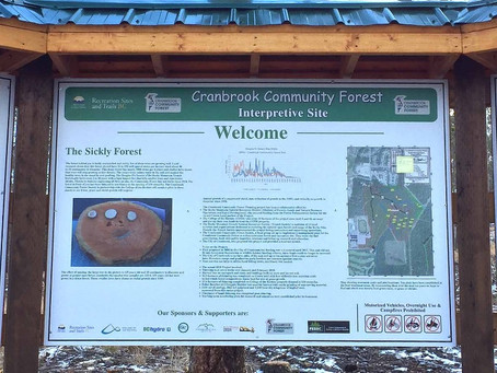 New Interpretive Forest Kiosk