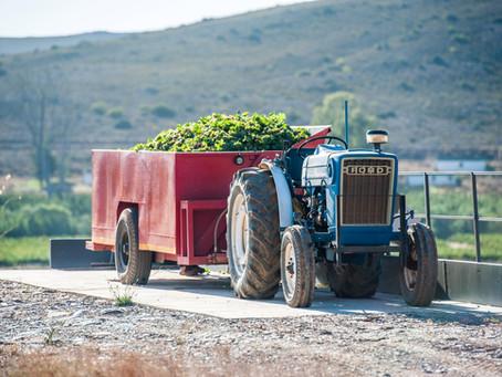Harvest Report 2021