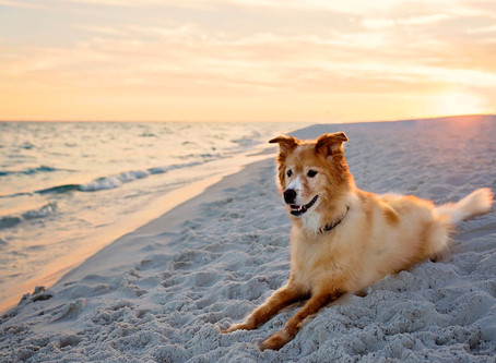 Dog Photography: Rachael Phillips Photography