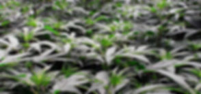 plants-640x300.jpg