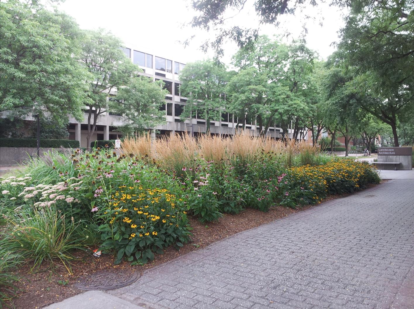 Pollinator-friendly Plantings