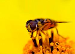 9+-+Pollen+collecter,+Randy+Bartholomew.jpg
