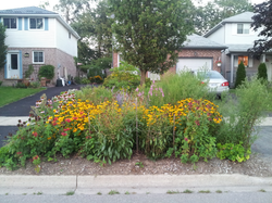 Pollinator-friendly Boulevard