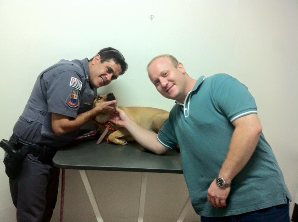 clinica veterinaria 24h campinas banho e tosa