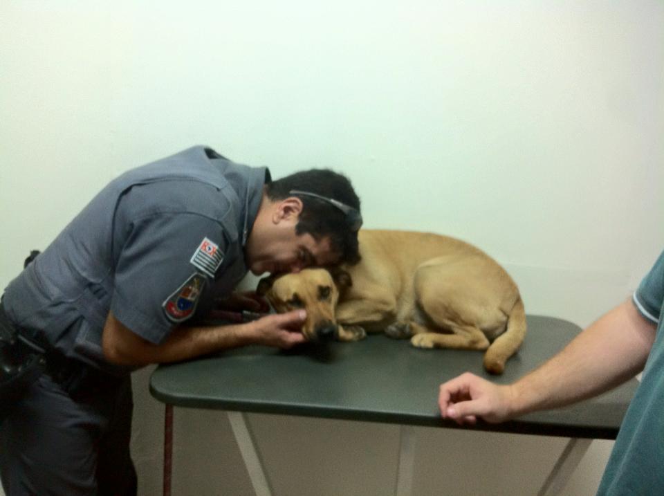 clinica veterinaria 24h campinas 6