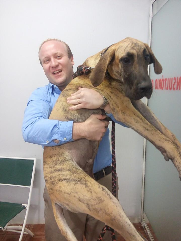 clinica veterinaria 24h campinas banho e tosa Caoxonado