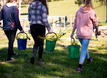 The Sun Shines For Landcare's Tree Planting Day