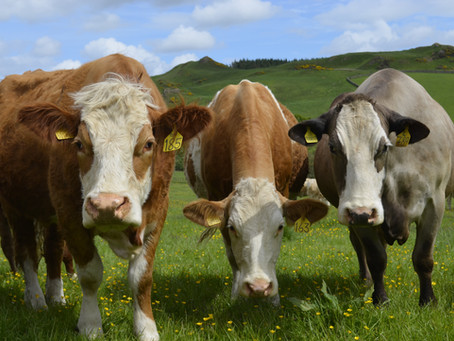 Setting The Global Standard In Beef Sustainability By Leveraging Expertise Around The World